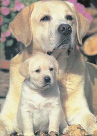 Algunas Razones para tener un perro